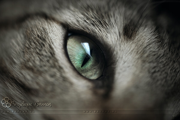 Photograph The eye... by Angelique Brunas on 500px
