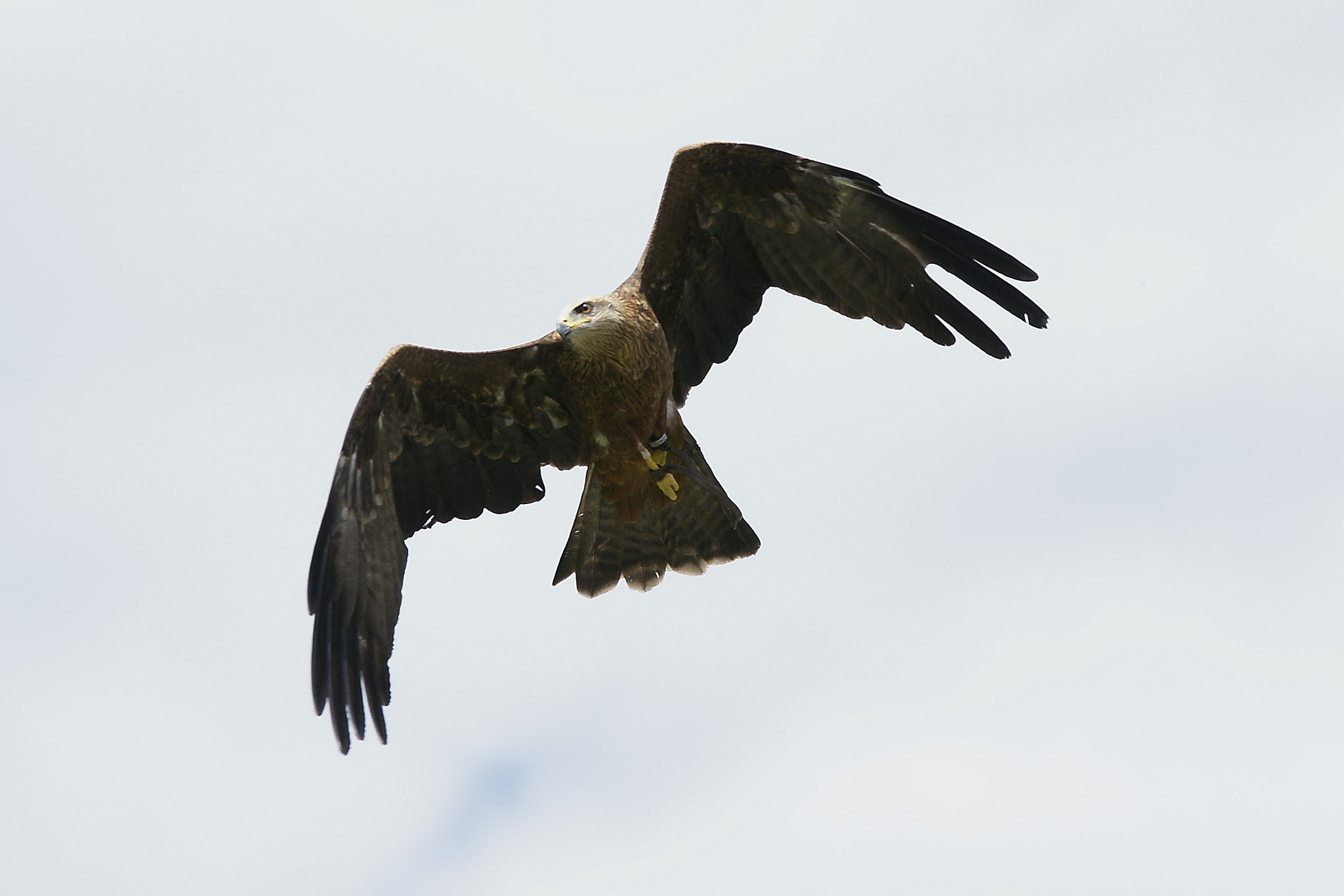 Photograph Eagle by Branko Frelih on 500px