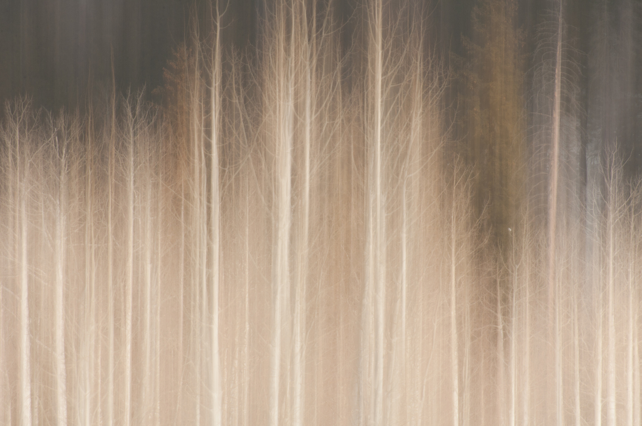 Photograph Aspen Abstract, Utah by Dave Wilson on 500px