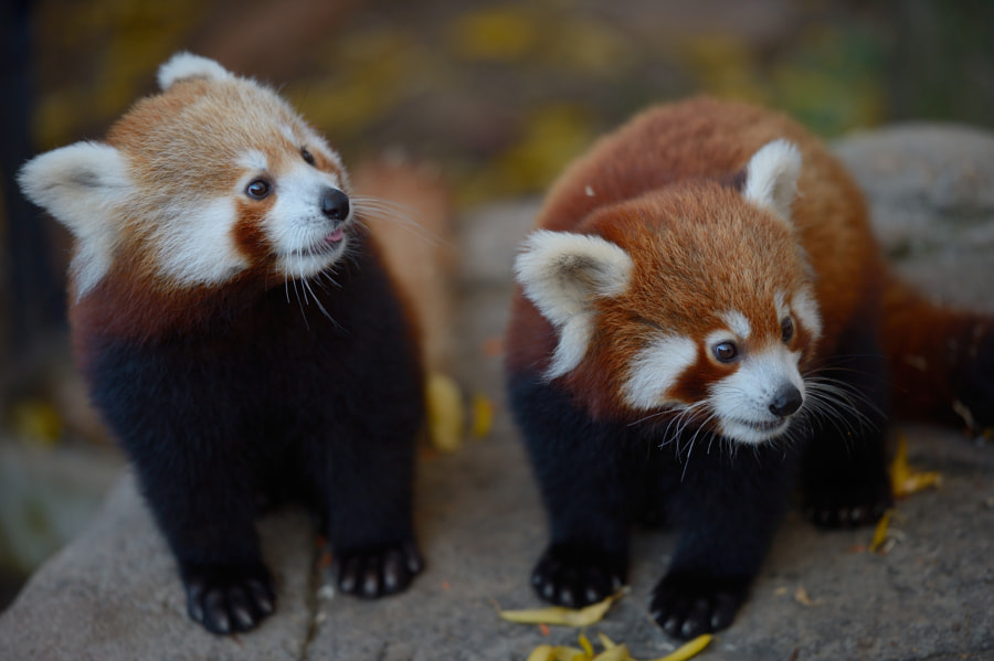 Photograph Too cute for words! by David Gray on 500px
