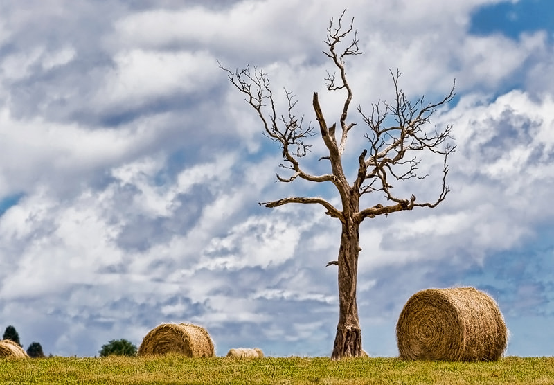 Photograph Tree Bales by Peter Daalder on 500px