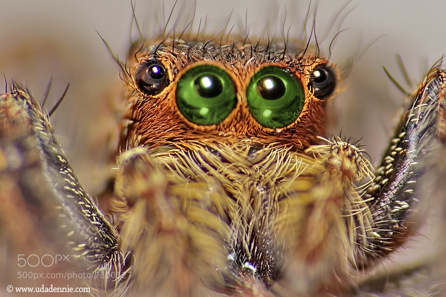 Photograph Green eyes by Uda Dennie on 500px