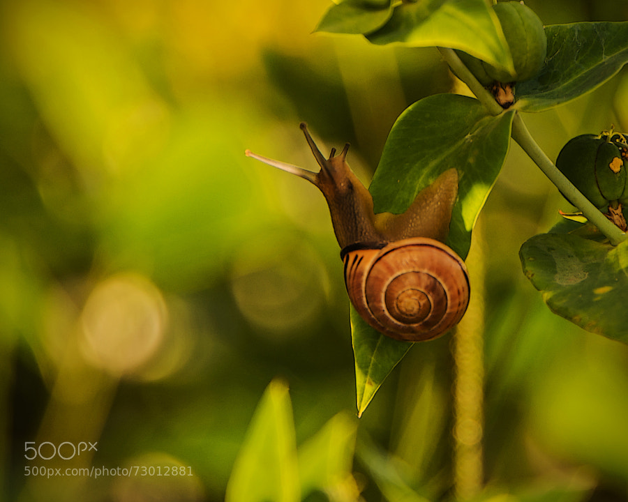 "You have to get inside the mind of a snail to really appreciate this one, and that's a tight fit! :))  Surely I'll be ""trending"" with this one!! Too much sun!! :))"