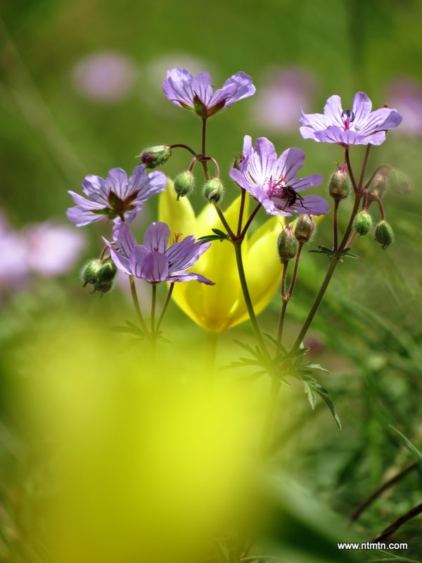 Photograph Spring flowers by Mohammad TayefehNafar on 500px