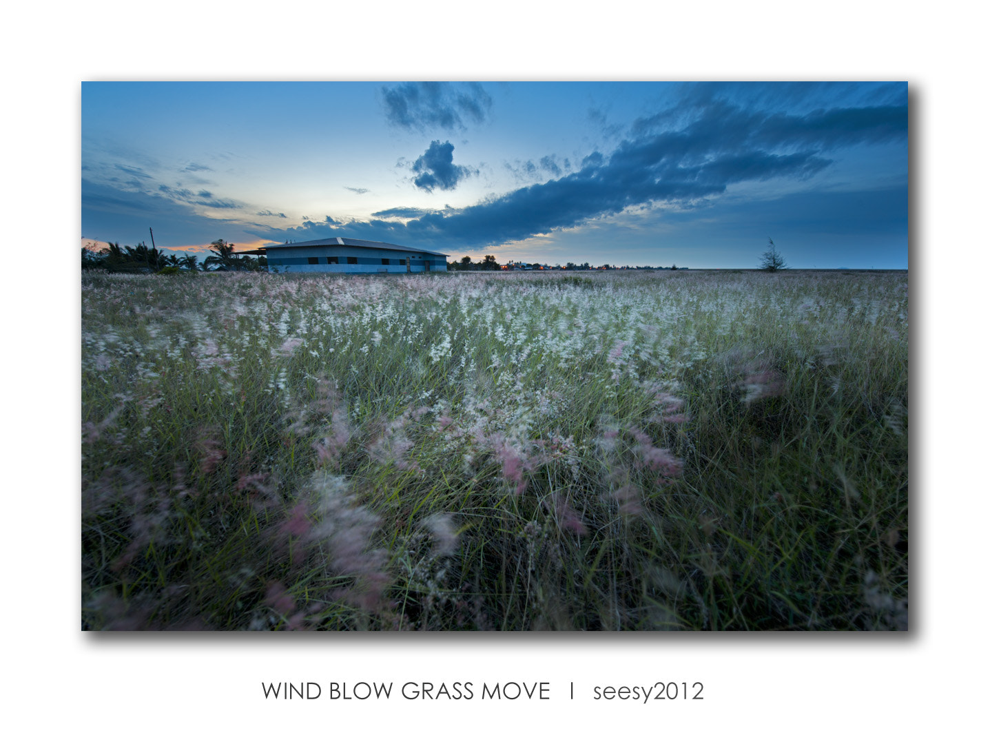 Photograph Wind Blow Grass Move by Lee Seesy on 500px