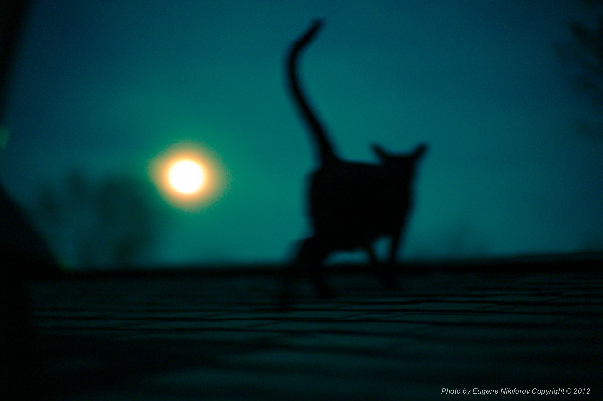 Photograph Cat and a full moon by Eugene Nikiforov on 500px