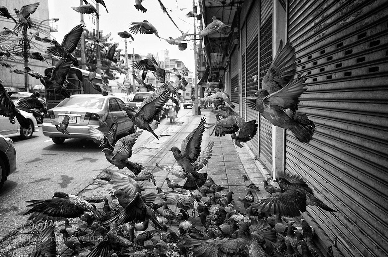 Photograph Bangkok Pigeons by Juan Hernandez on 500px