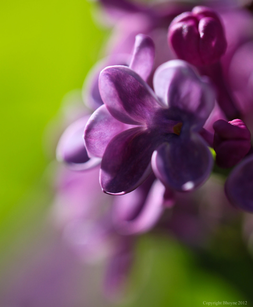 Photograph Purple and green by Brian Hoyne on 500px