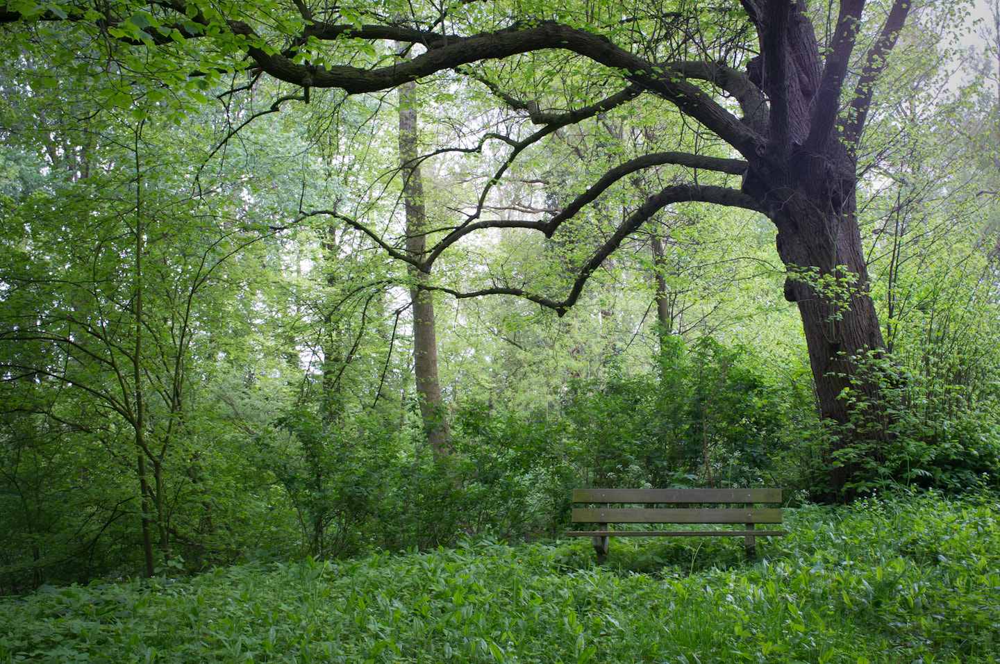 Photograph In the Forest by Edwin van Nuil on 500px