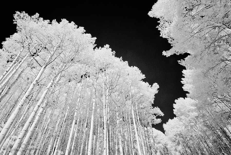 Photograph Infrared Aspens by Les Saucier on 500px