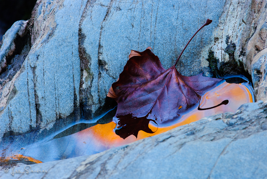 Photograph Fall leaf and reflection by Les Saucier on 500px