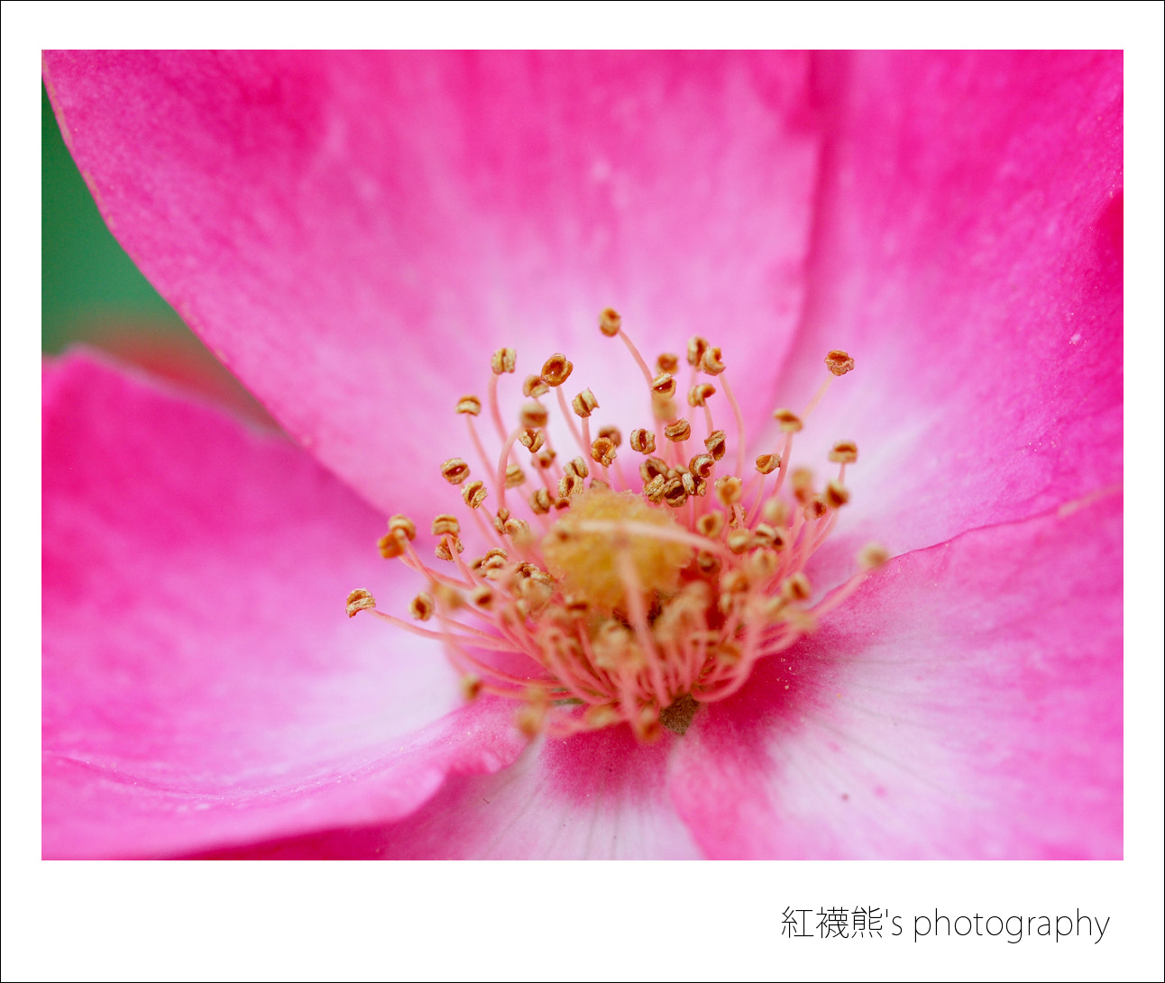 Photograph Close to me by Kyle Lin on 500px