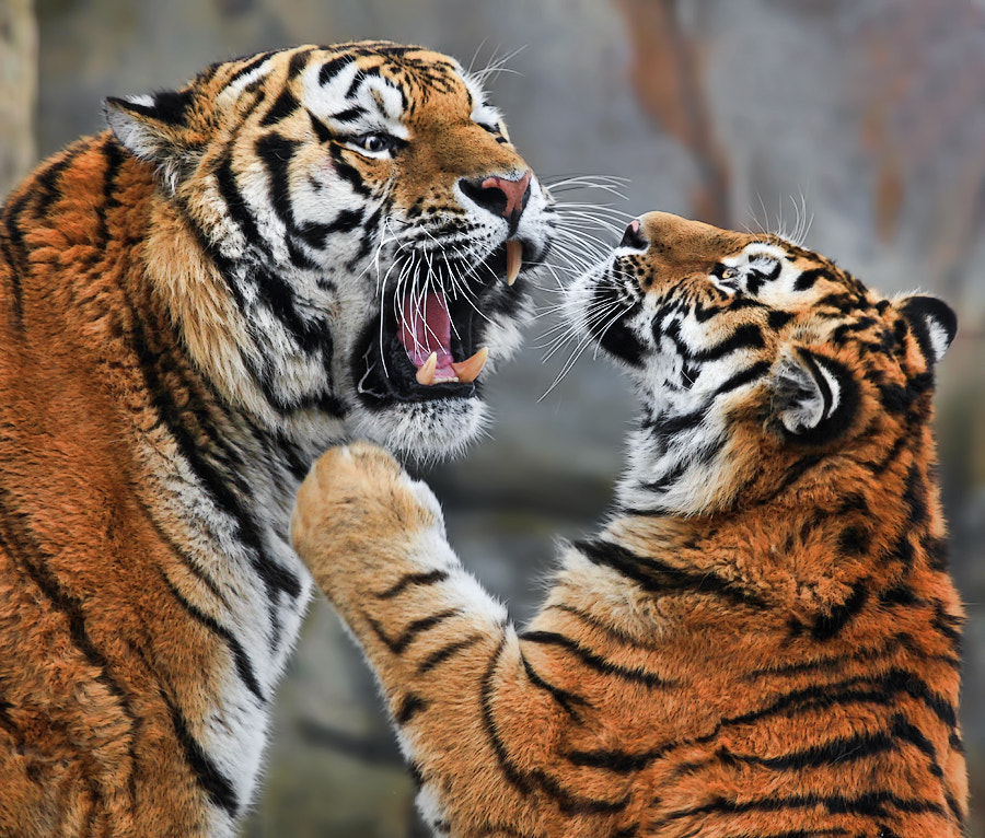 Photograph Behave yourself, Son! by Klaus Wiese on 500px