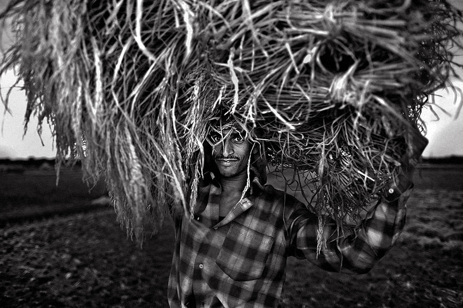 Photograph happy for the harvest | west bengal by Soumya Bandyopadhyay on 500px