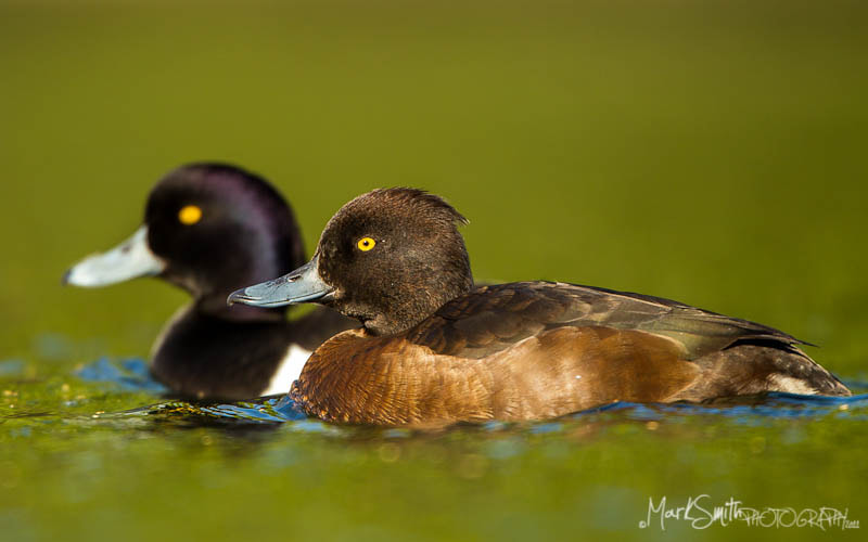 Photograph Courting by Mark Smith on 500px