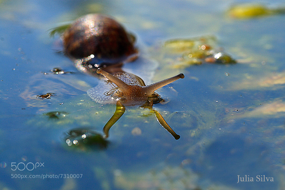 Photograph SNAIL HORNS WITH THE SUN by Julia Silva on 500px