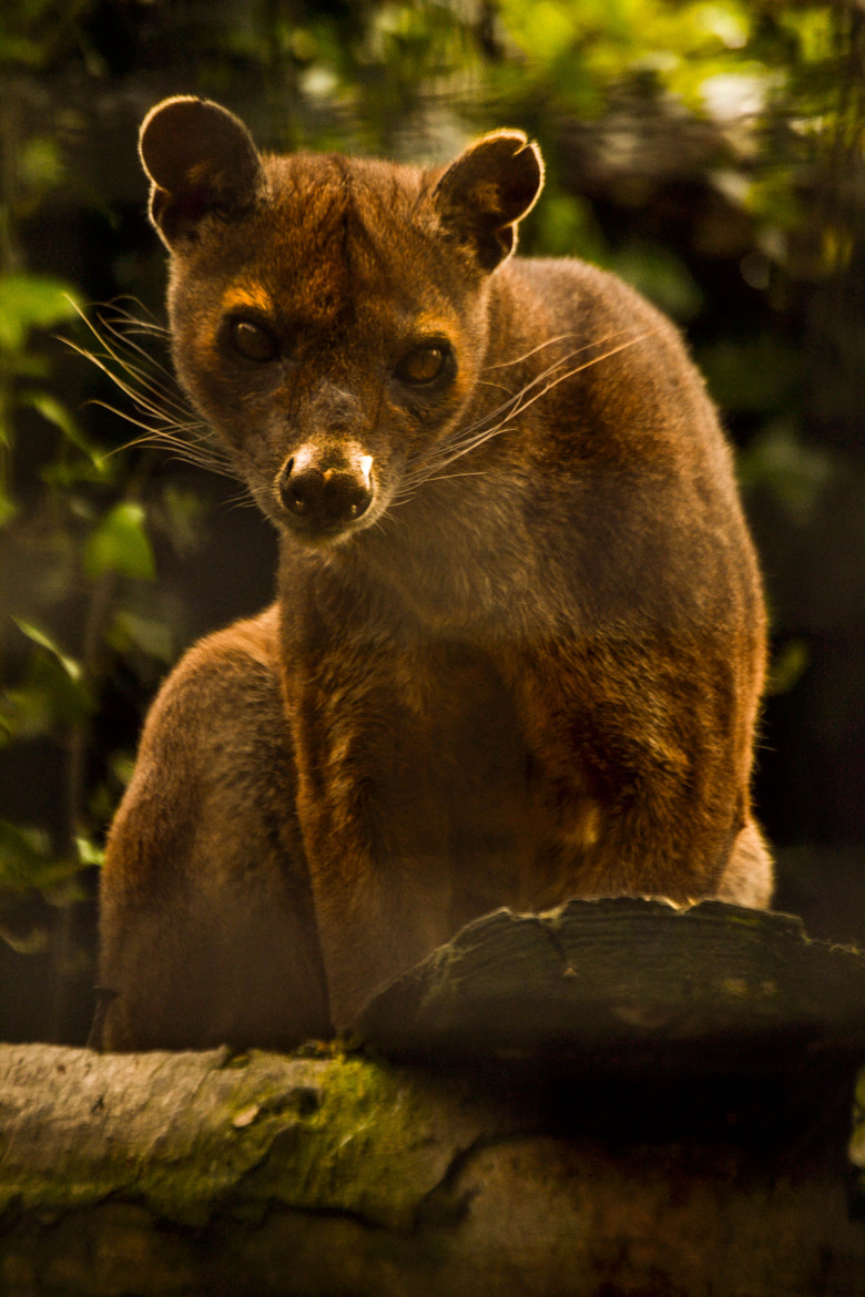Photograph fossa by Rachel Browning on 500px