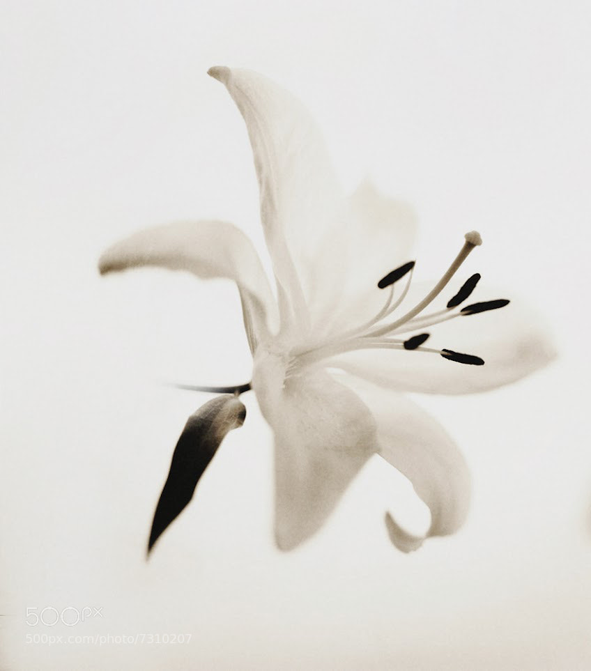 Photograph Pola Flower type 55 by Andy Lee on 500px