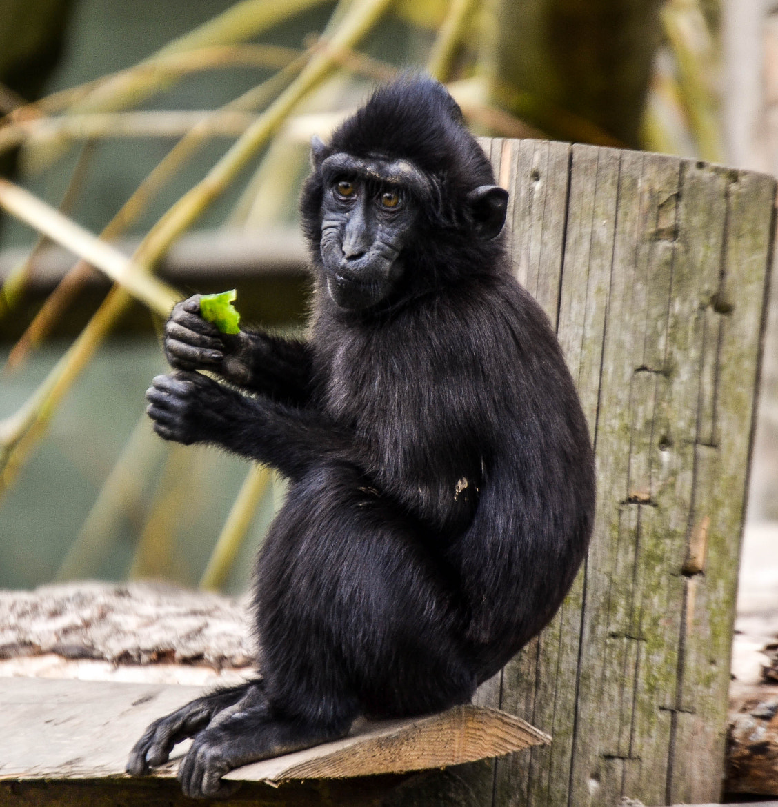 Photograph monkey by Rachel Browning on 500px