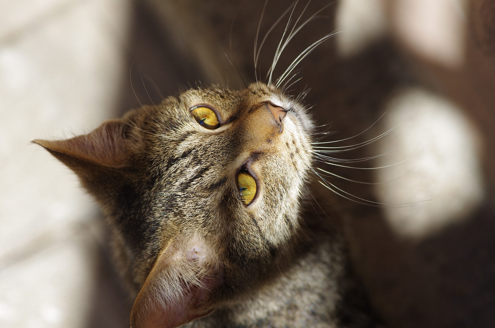 Photograph street cat by Ivan Marin on 500px