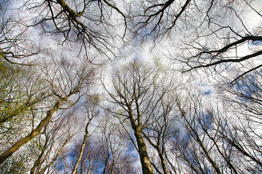 Photograph Tree Capillary by Stephen Emerson on 500px