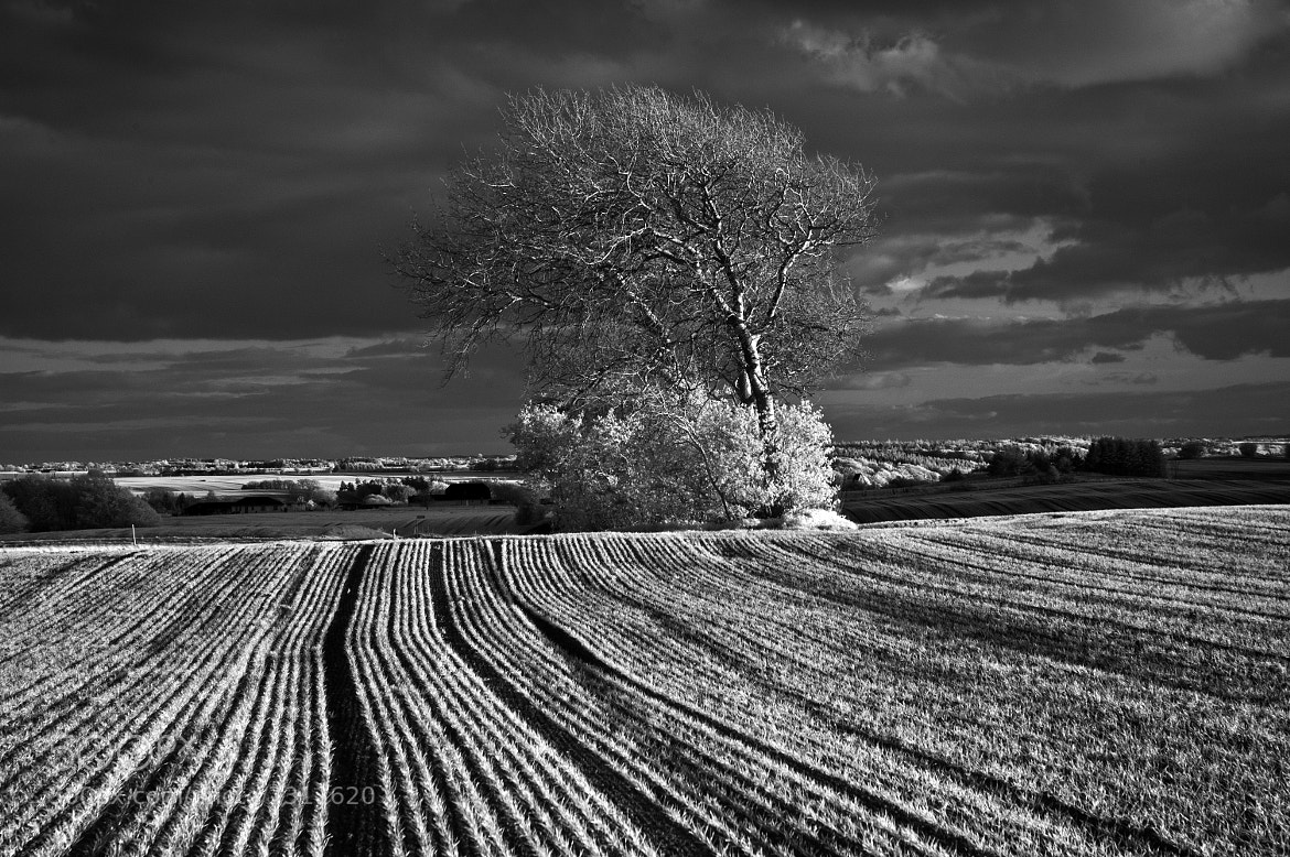 Photograph Countryside landscape - Viborg area IR by Daniel Hoffmann on 500px