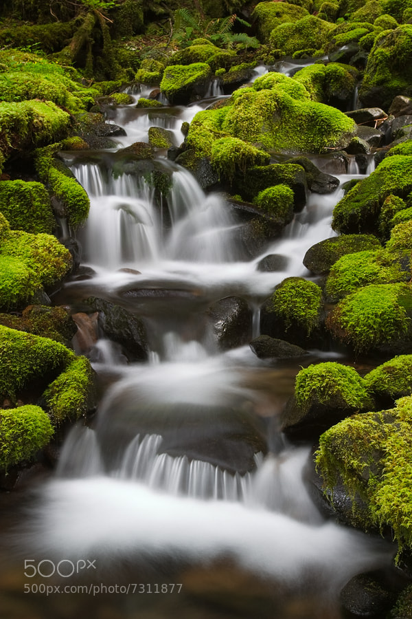 Photograph Stream, Sol Duc Trail, Olympic National Park, Washington by David Bostock on 500px