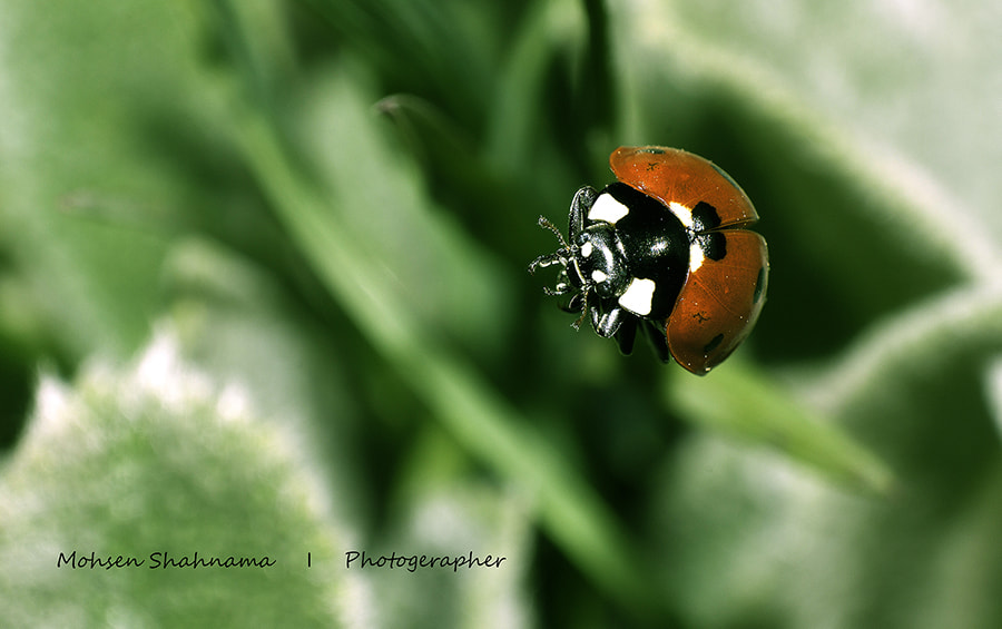 Photograph Small but beautiful by mohsen shahnama on 500px