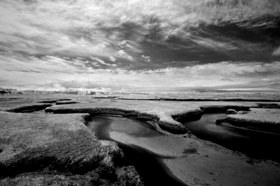 Bass Hole Salt Marsh- Cape Cod (ir)