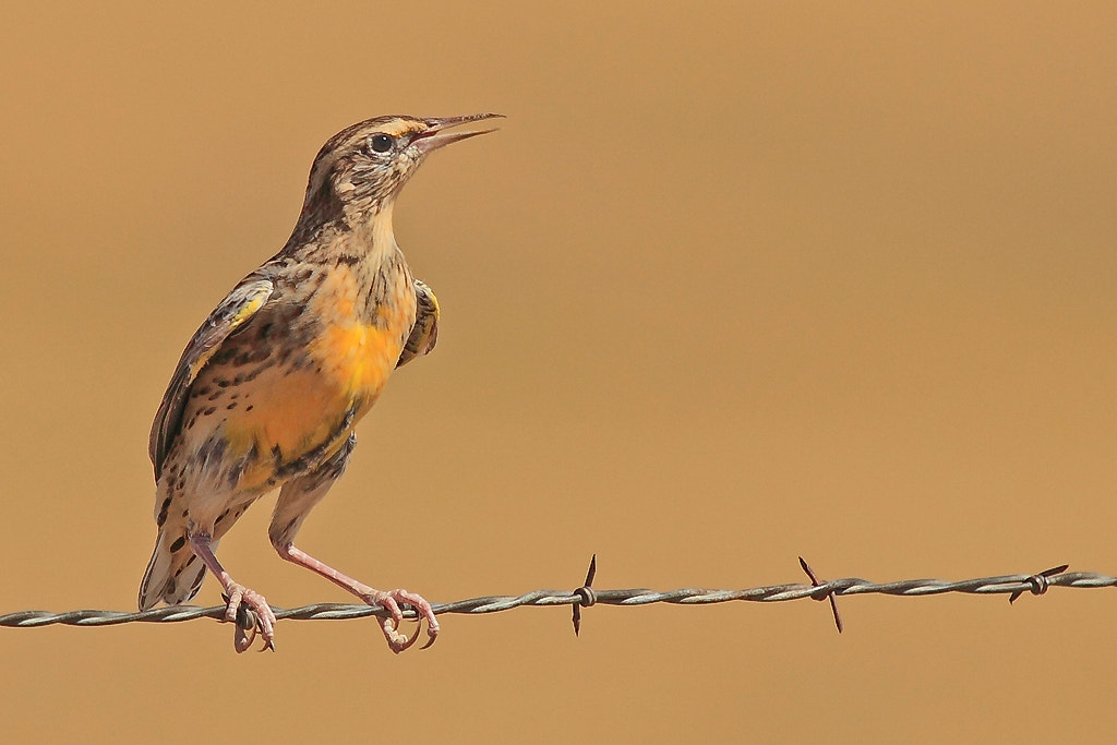 Photograph Barbed Wire Serenade by Linn Smith on 500px