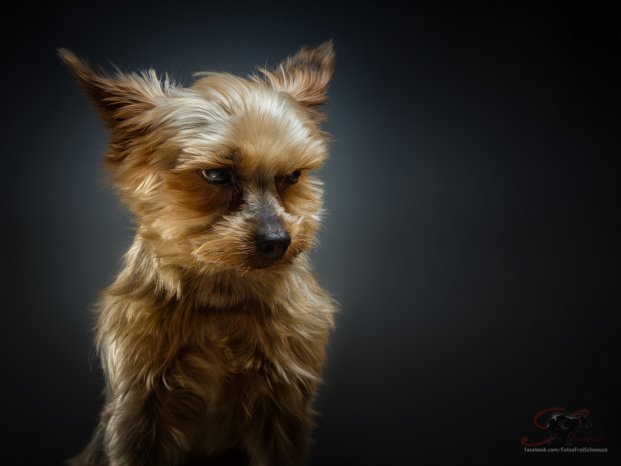 Photograph the grumpy dog by Christian Vieler on 500px