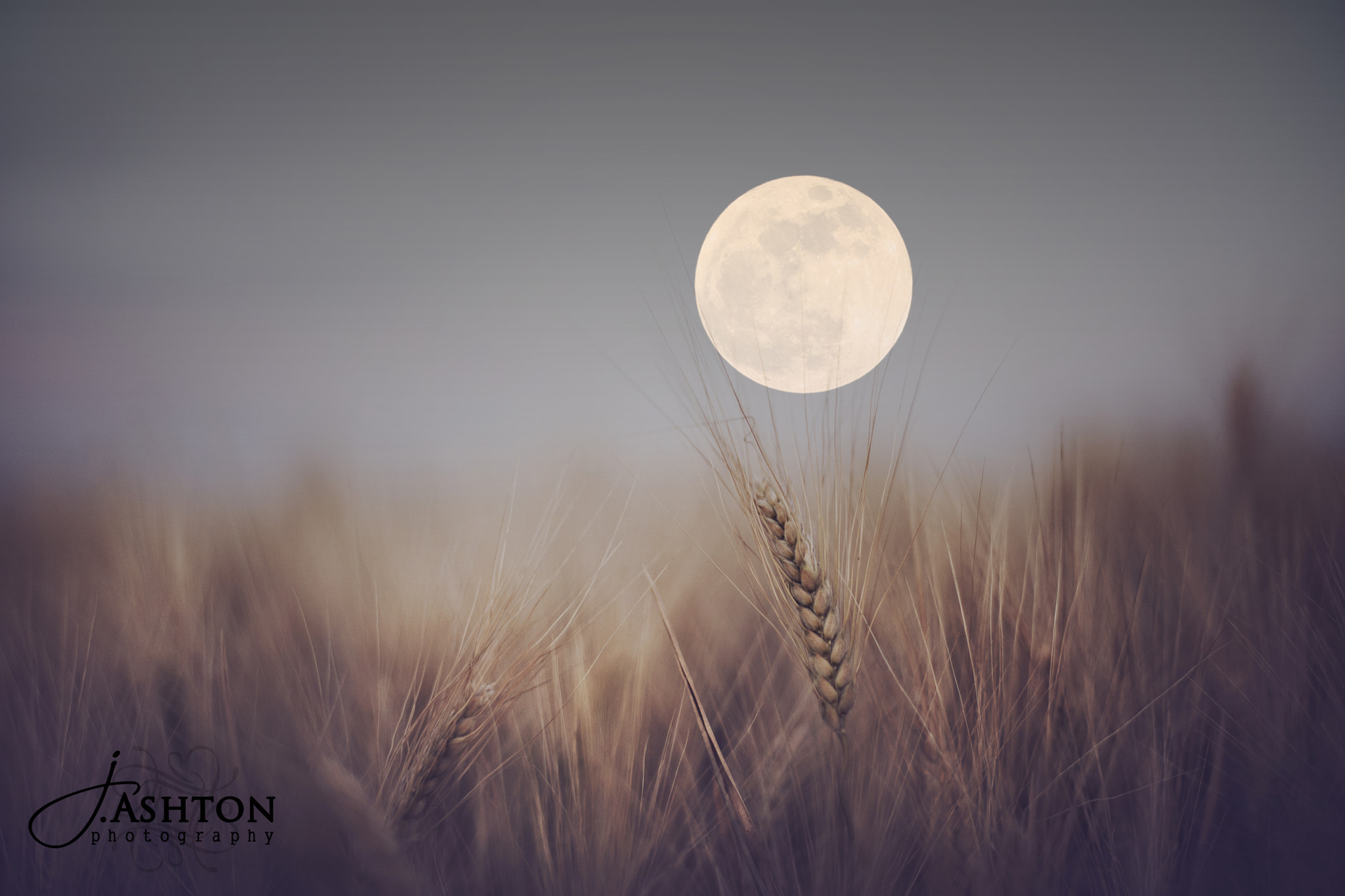 Photograph Super Moon AZ by Justin Ashton on 500px