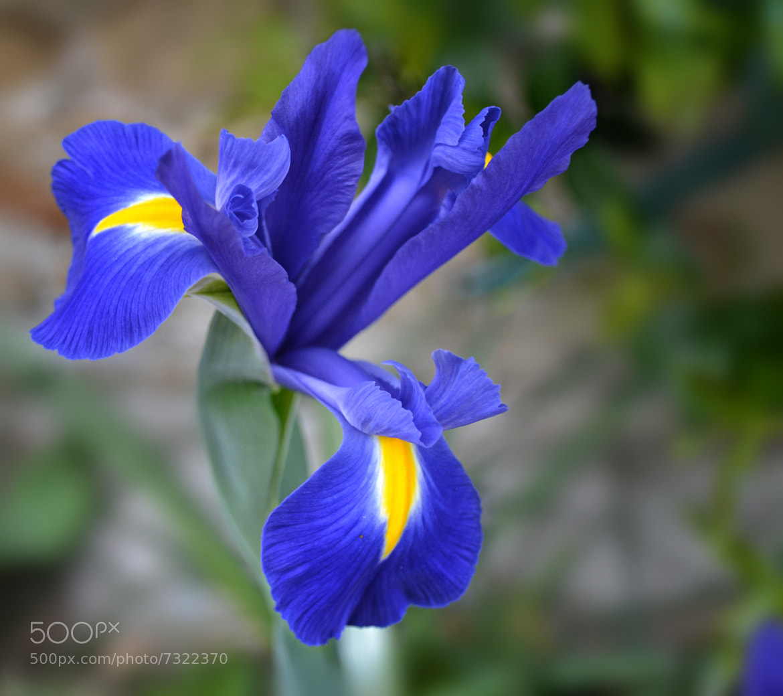 Photograph Iris  by Marilena Borriero  on 500px
