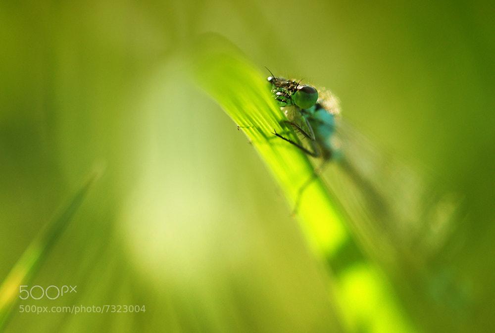 Photograph - by Miklos Liziczai on 500px