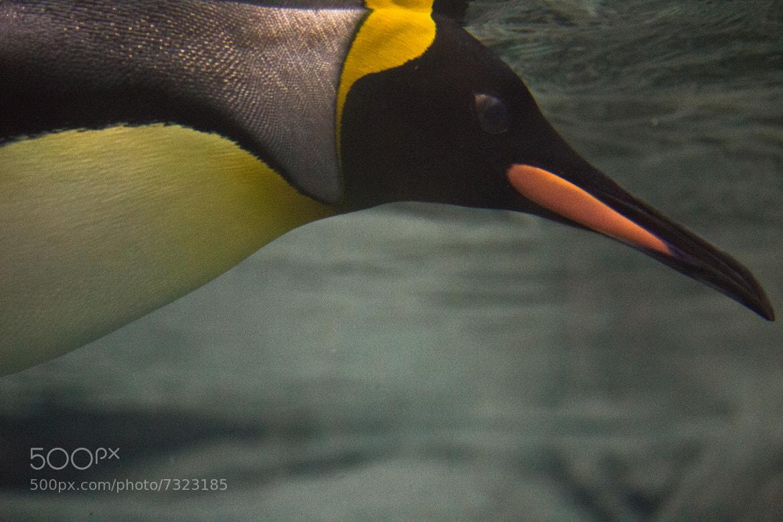 Photograph Underwater Flight by Derek Eng on 500px