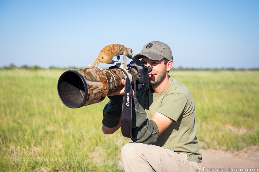 Photograph Pesky Meerkat! :) by Will Burrard-Lucas on 500px