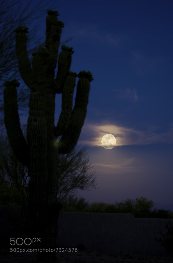 Desert Moon by Tim Schneider (tim_s) on 500px.com