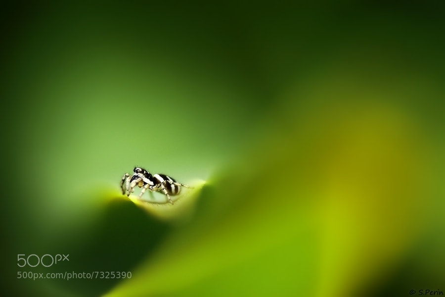 Photograph Green Dream  by Stephane PERIN on 500px