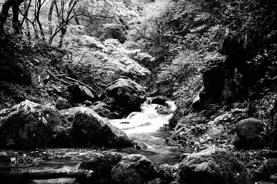 Mitake-san Rock Garden by Elmer Segui (easegui) on 500px.com