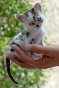 Kitten in a hand by Klassy Goldberg on 500px