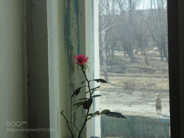 Photograph Роза в гордом одиночестве by Boris Wladimirowich Wasiliew on 500px