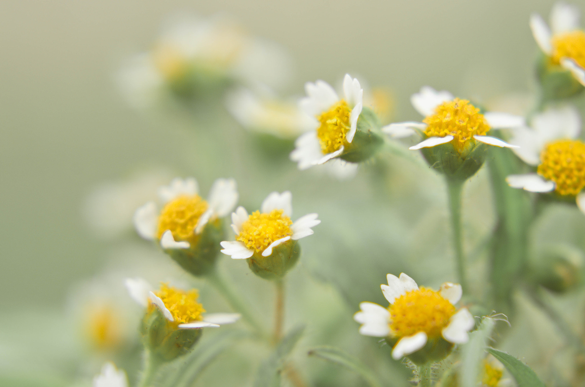 Photograph Little flowers by Mariana Ito on 500px