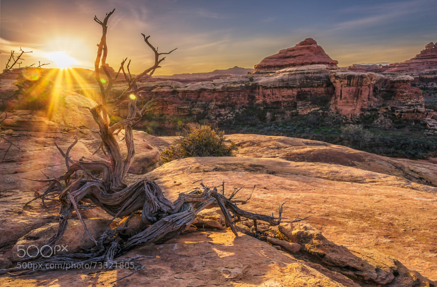 Photograph Canyonlands by Brian Rogers on 500px