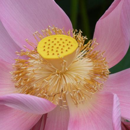 flower Surinam