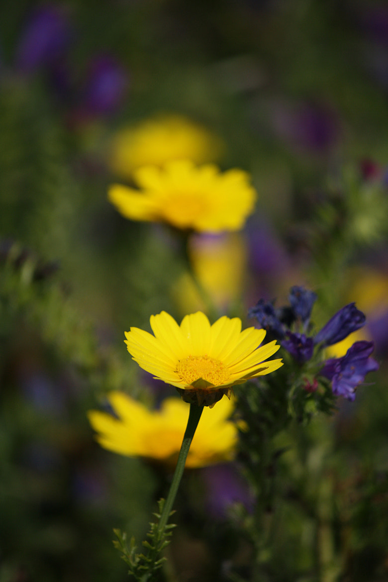 Photograph Flower by Arnaud Ozeel on 500px