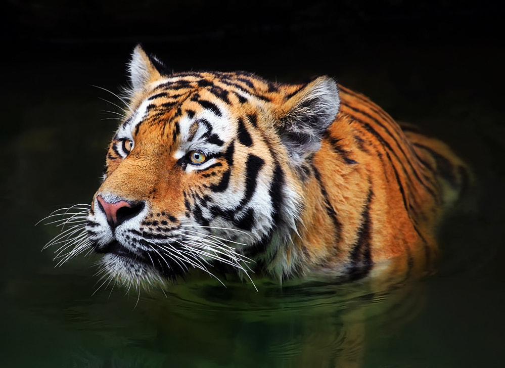 Photograph Bathing Beauty by Klaus Wiese on 500px