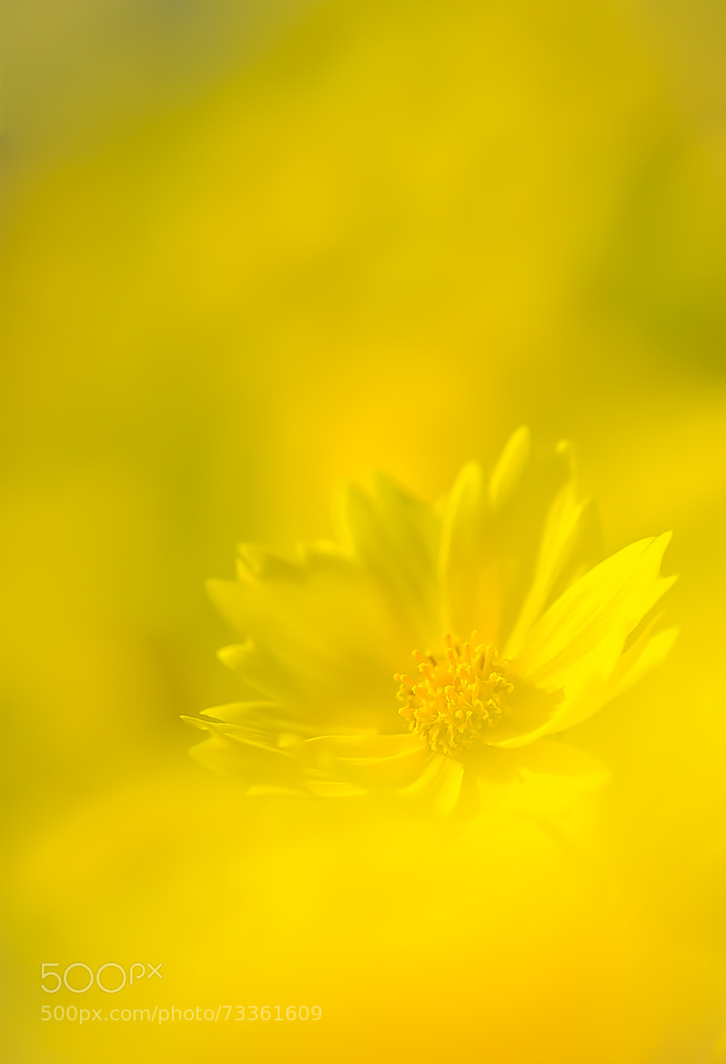 Photograph Yellow by naoki nomura on 500px