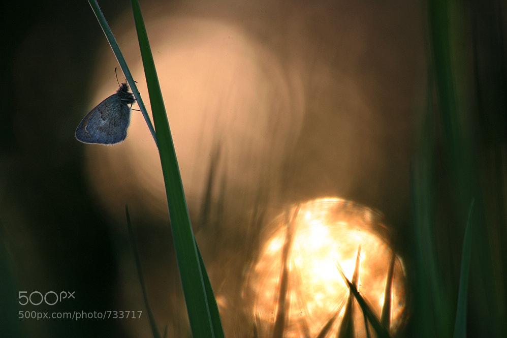 Photograph Sunrise by Vadim Trunov on 500px