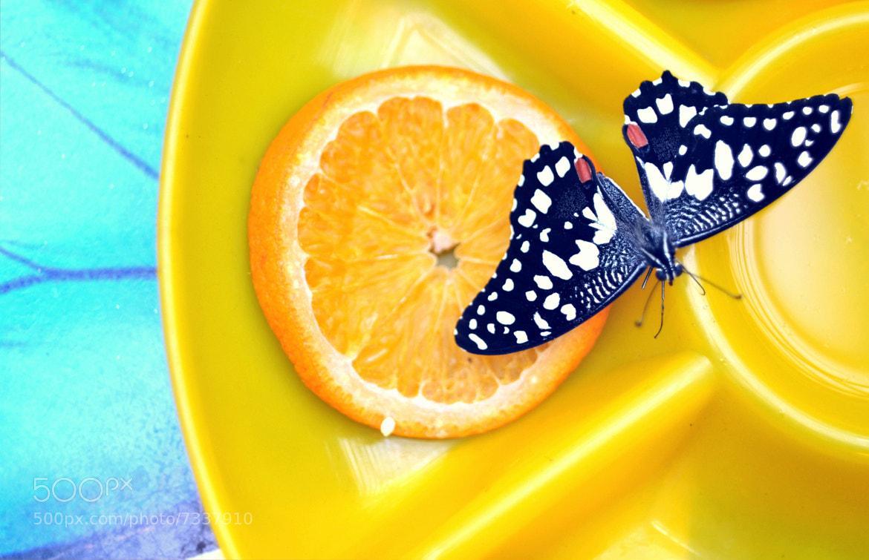 Photograph butterfly by garipova_renata on 500px