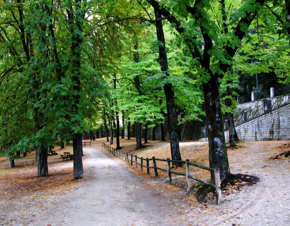 Photograph park by fiodor m on 500px